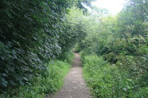 Aberford Railway route through Parlington Hollins